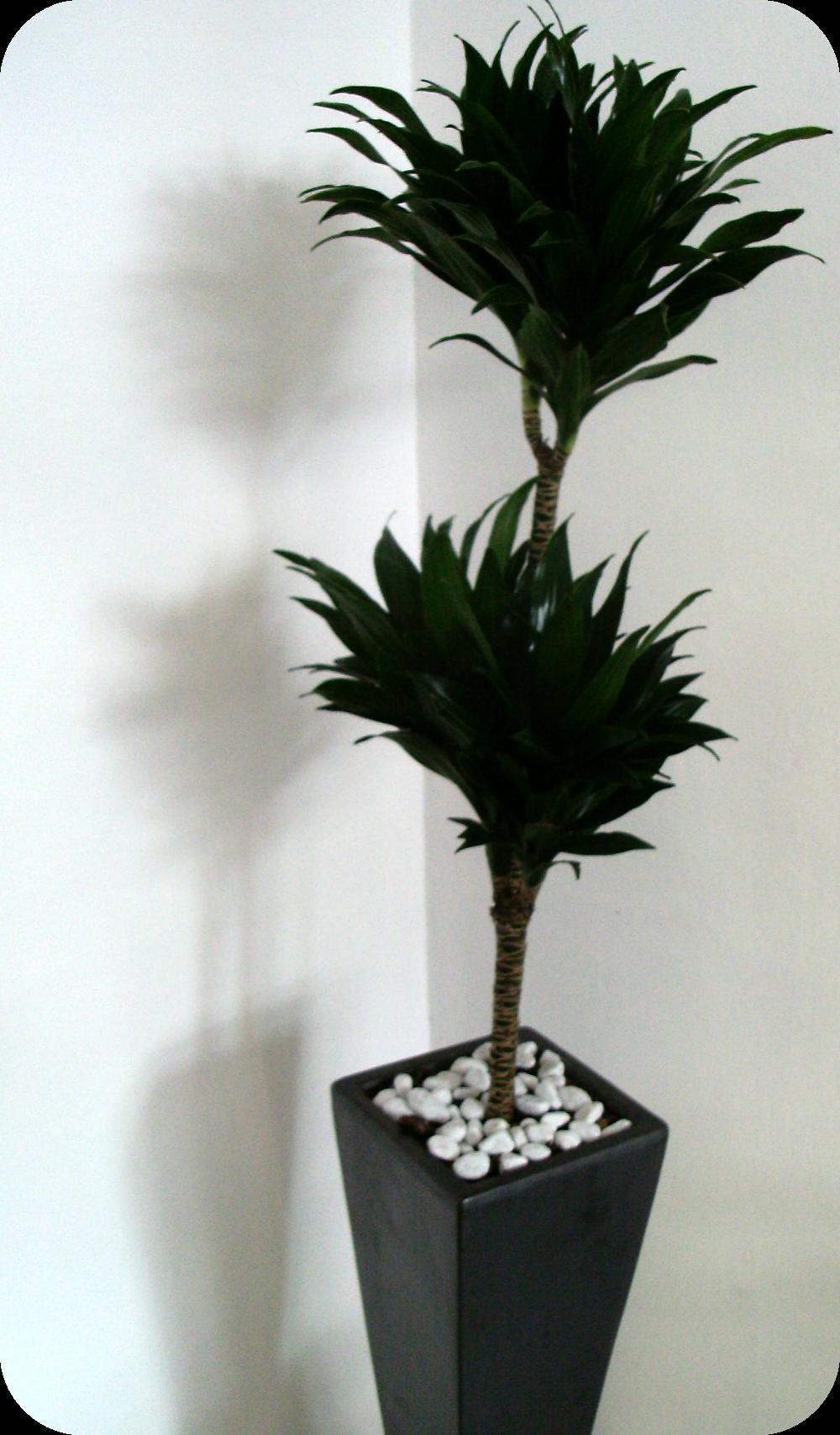 Le nostre creazioni piante da interno il coccio fiorito for Piante da interno alte