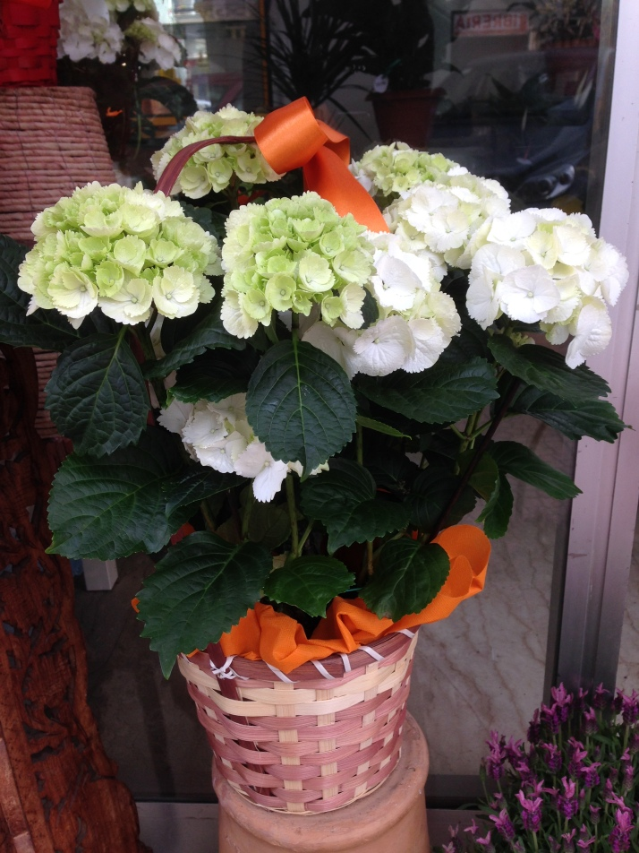 Piante da interno il coccio fiorito for Piante da interno profumate