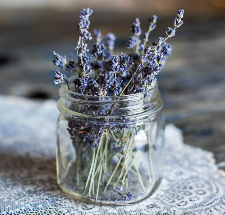 heather-ford-lavanda